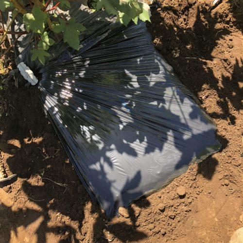 秋冬野菜のダイコン2種はじめます。まずは土づくり!