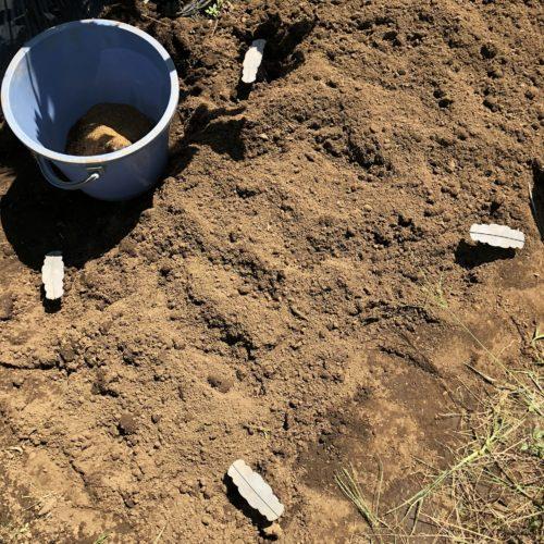秋冬野菜の準備②茎ブロッコリーとキャベツの土づくり